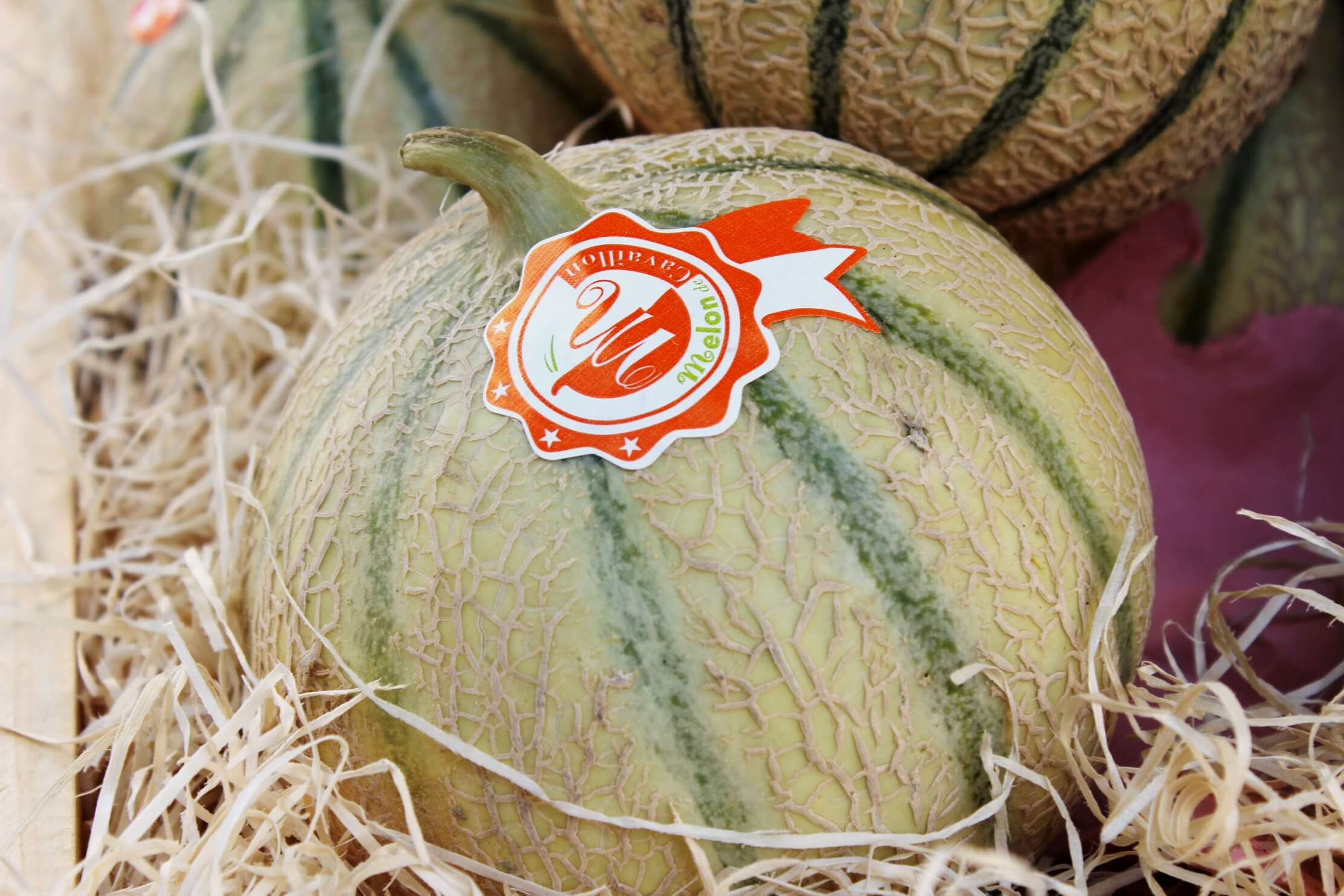 Photo de melon de Cavaillon
